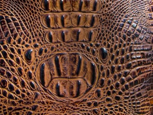 Butternut closeup